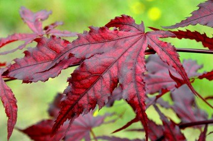 The Top Tips For Choosing Patio Trees