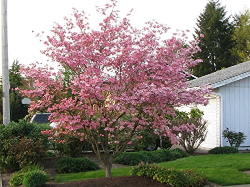 Planting Trees Will Always Enhance The Look And Experience You Have When  Using Your Patio Space. So Be Sure To Take The Tips Mentioned Above And Use  Them To ...