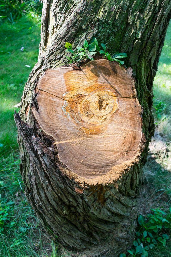 tree-927812_1280