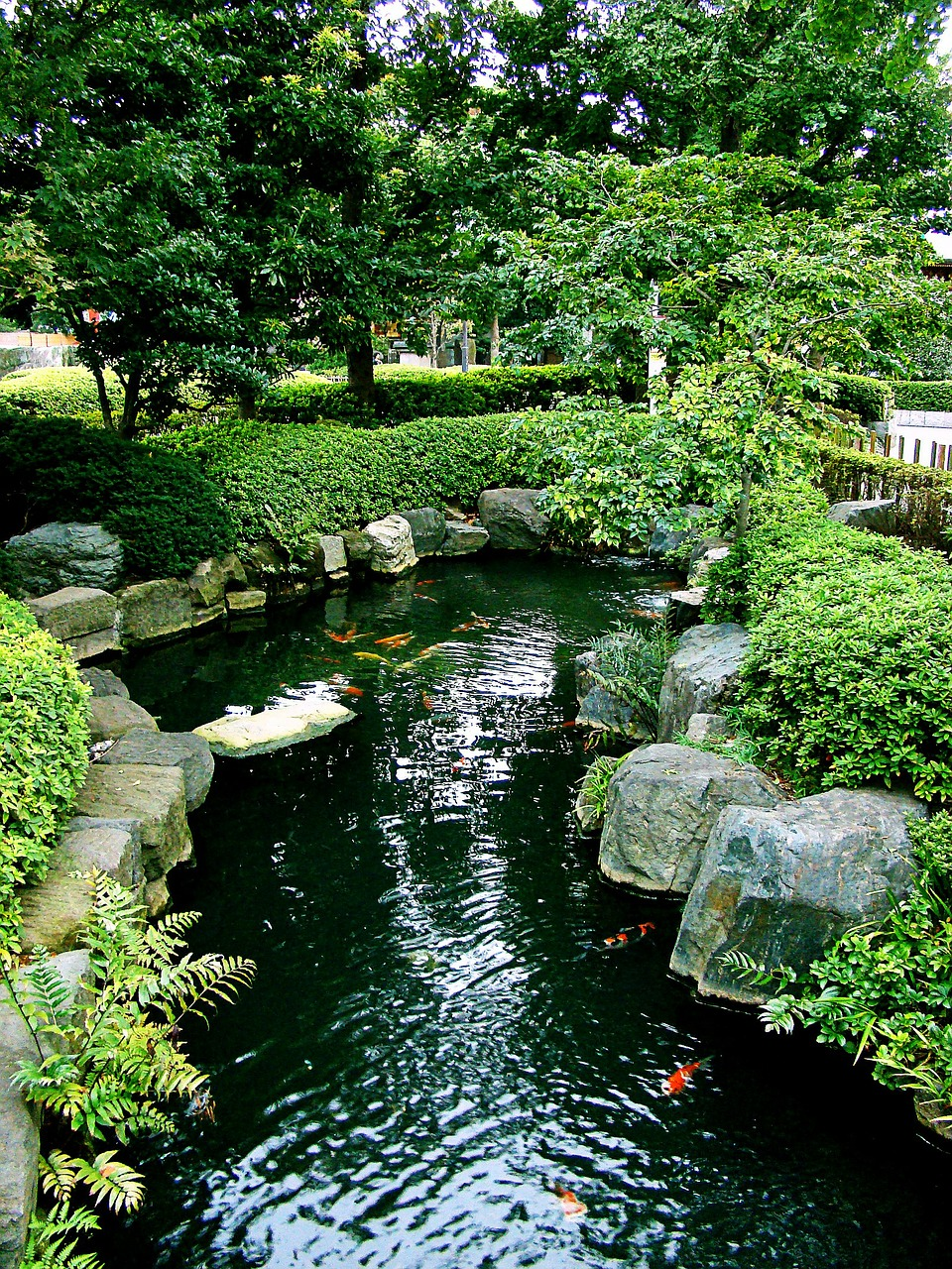 How to build a backyard koi pond the garden and patio for Koi ponds and gardens
