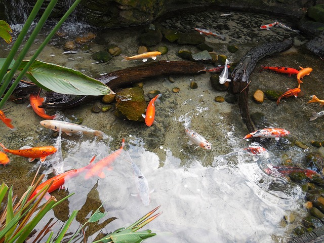 How to build a backyard koi pond the garden and patio for Making a fish pond