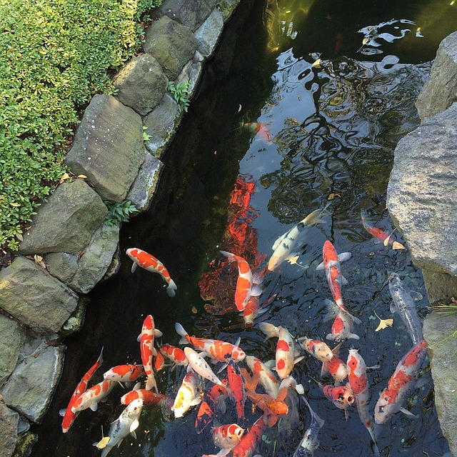 How to build a backyard koi pond the garden and patio for Making a koi pond