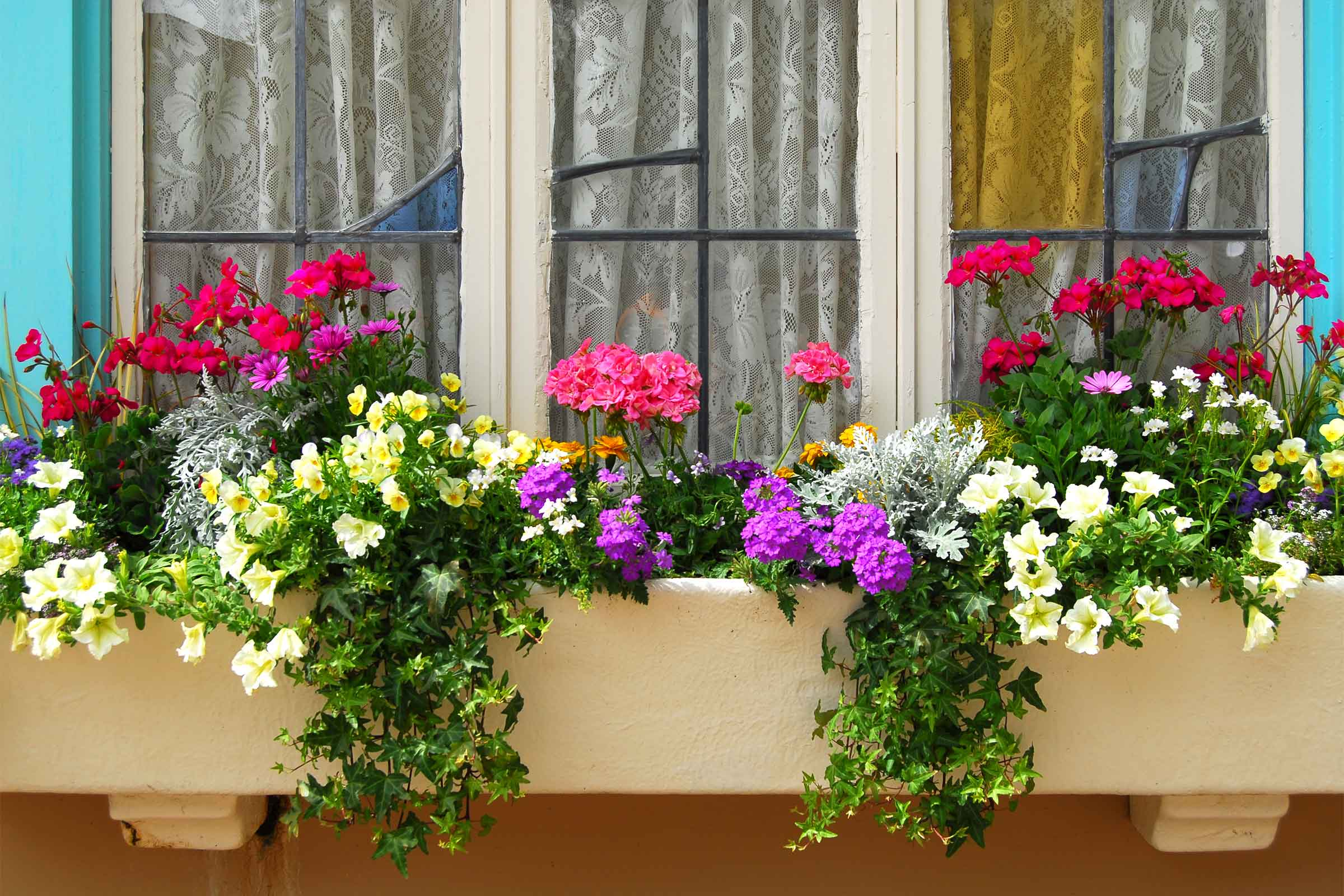 Flower Window Baskets : Filling those window boxes flower species that thrive