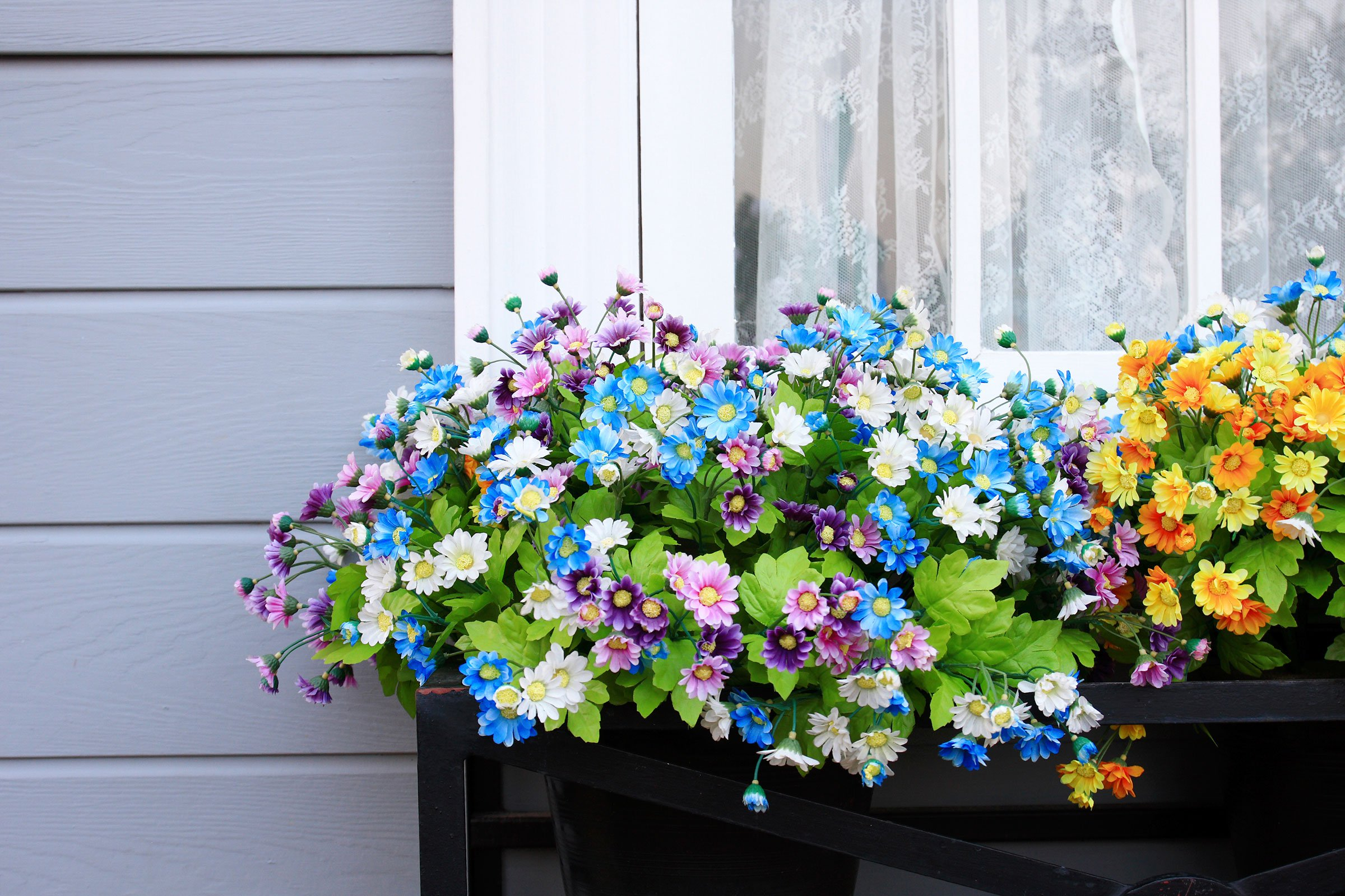 Filling Those Window Boxes Flower Species That Thrive With