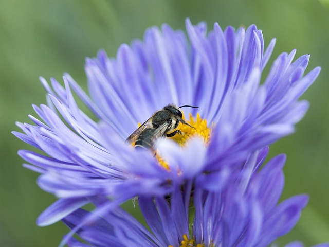 The Buzz About Bee Gardens