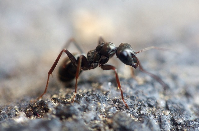 Coffee Grounds Ants