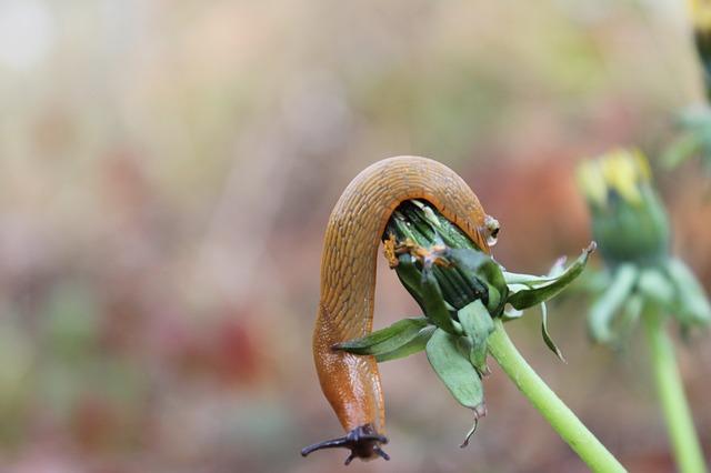 Coffee Grounds Slugs