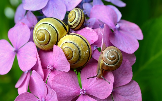 Coffee Grounds Snails