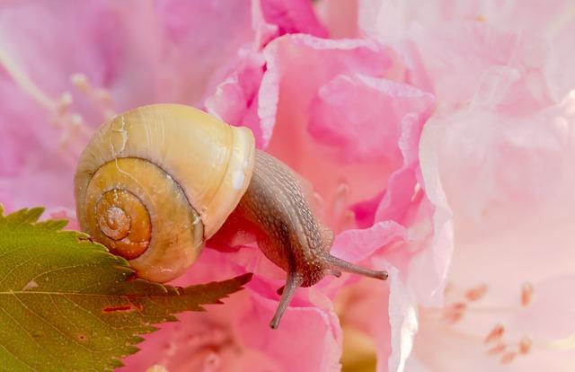 Copper Tape Snails